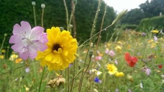 Flower garden, Culzean Castle