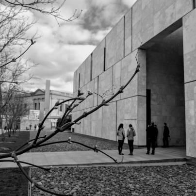 The Barnes Foundation, Philadelphia, landscape by OLIN