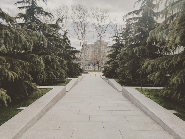 Deodar Cedars at the Barnes Foundation, Philadelphia, OLIN